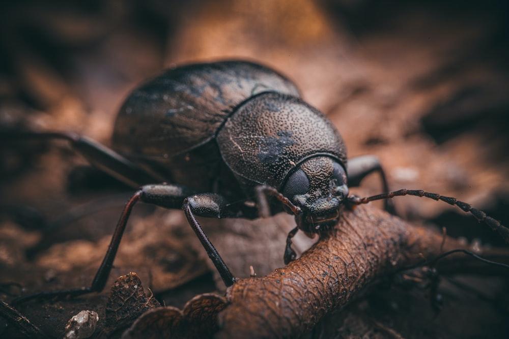black beetle on brown stem in macro photography during daytime