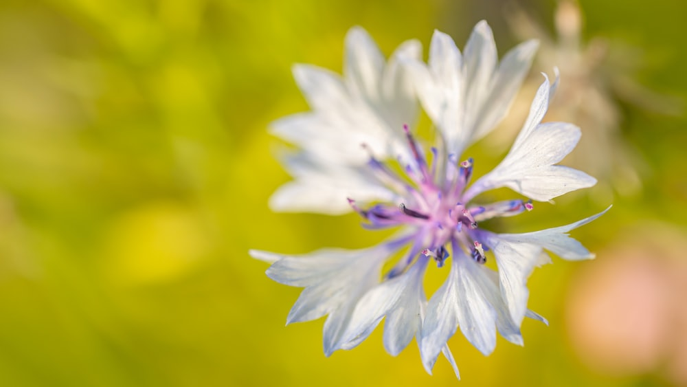 white and purple flower in macro photography