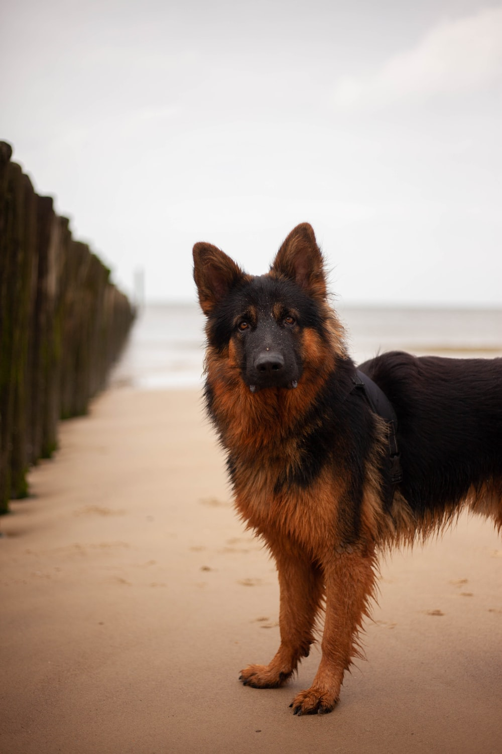 black and tan german shepherd puppy on white sand during daytime