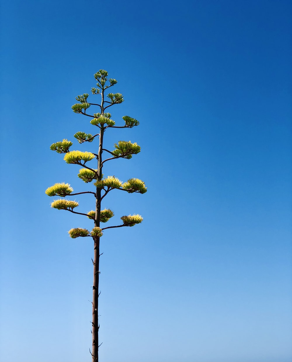 yellow flowers on brown wooden stick under blue sky during daytime