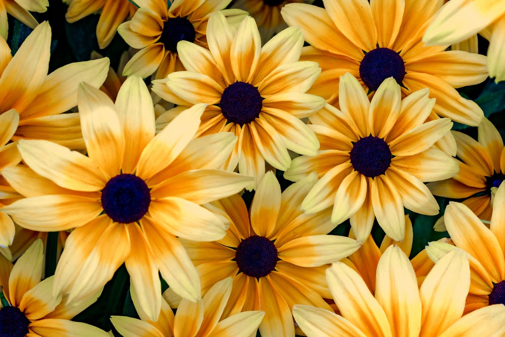 yellow and black flower in close up photography