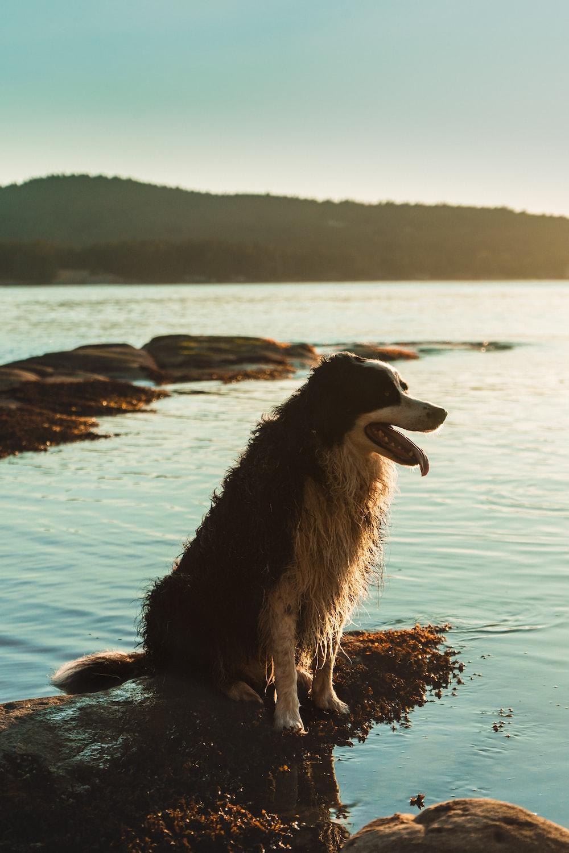 black and white long coated dog on seashore during daytime