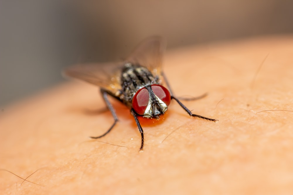 black and red fly on brown textile