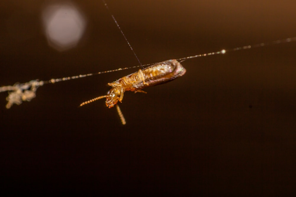 brown and black insect on web in close up photography