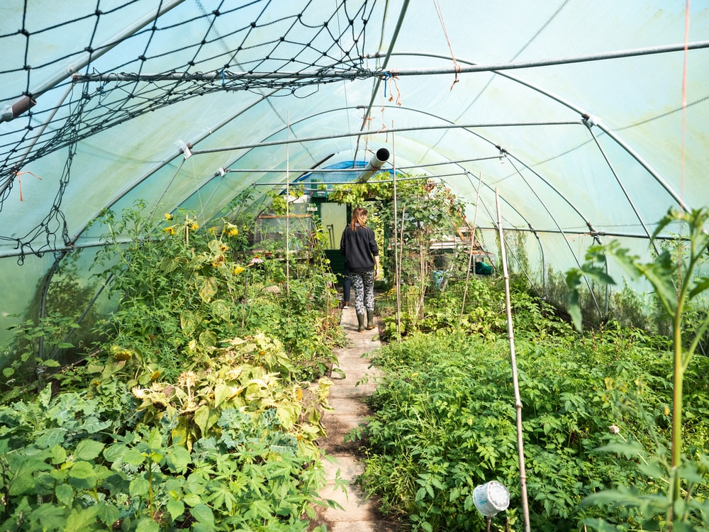 man in blue jacket standing in green plants