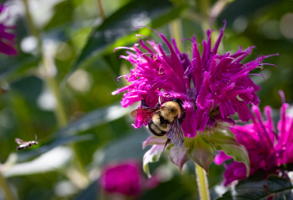 purple flower with bee on top