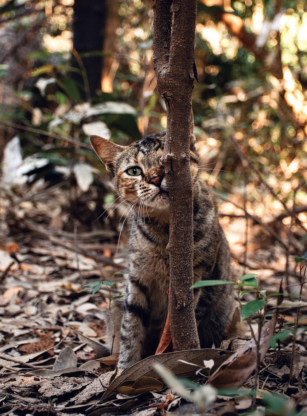 brown tabby cat on brown leaves
