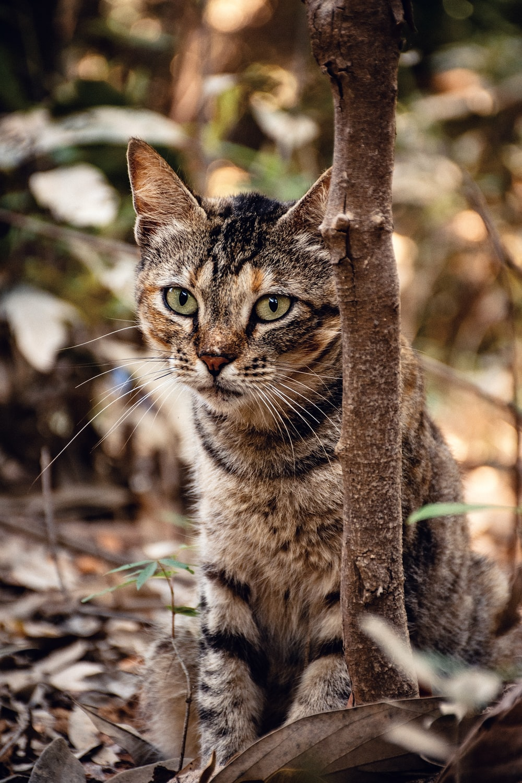brown tabby cat on brown tree branch
