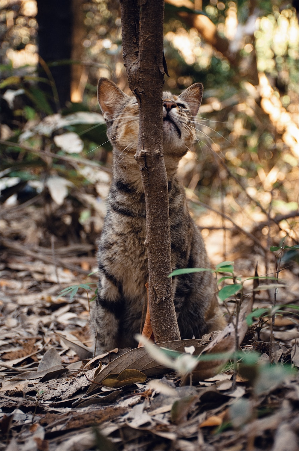 brown tabby cat on brown dried leaves during daytime
