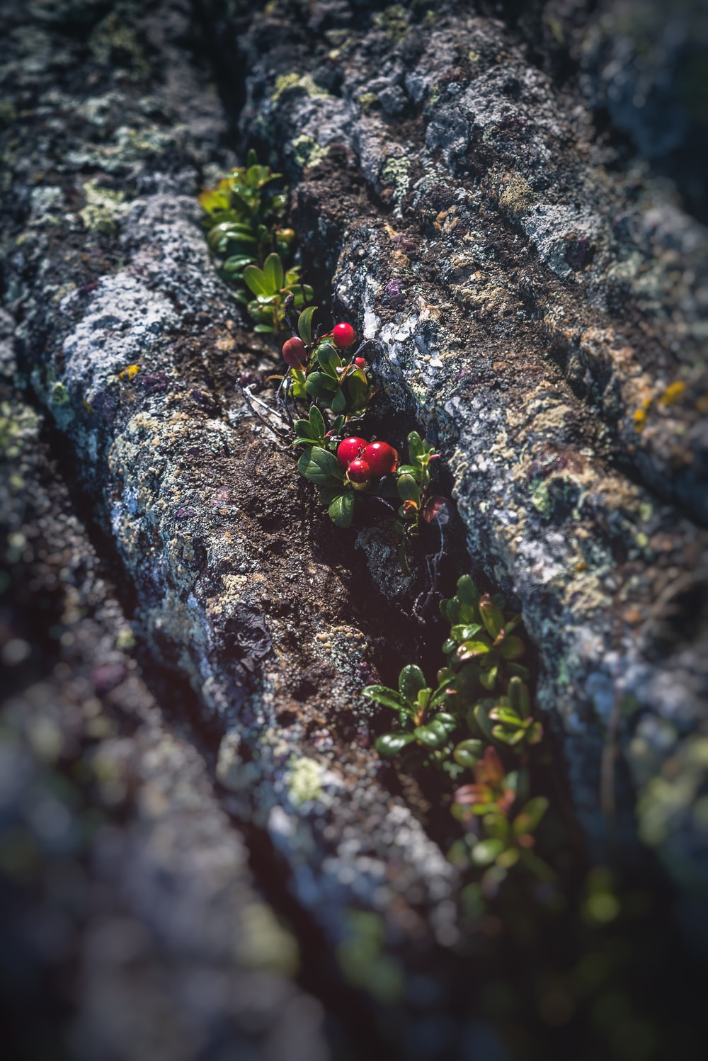 red fruits on brown and black rock