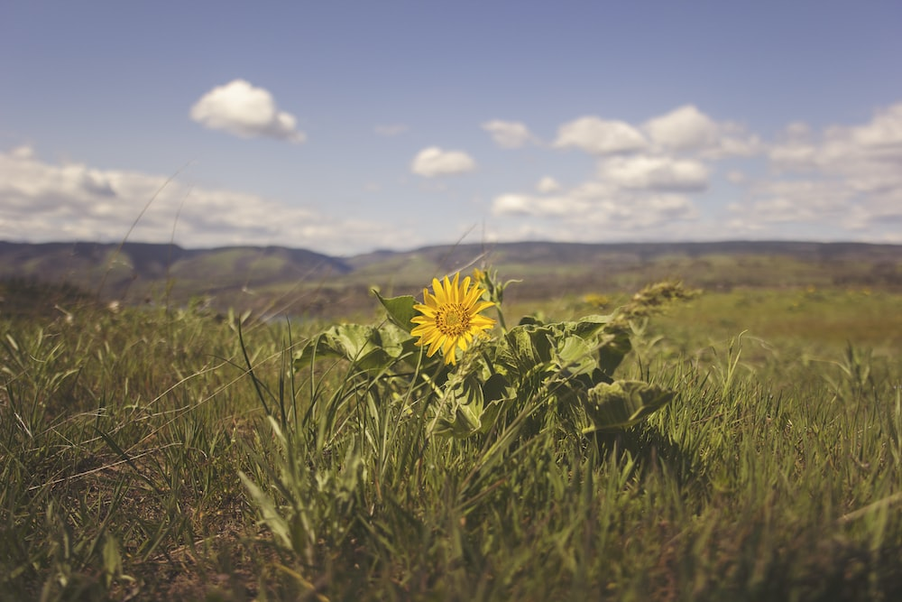 yellow flower on green grass field during daytime