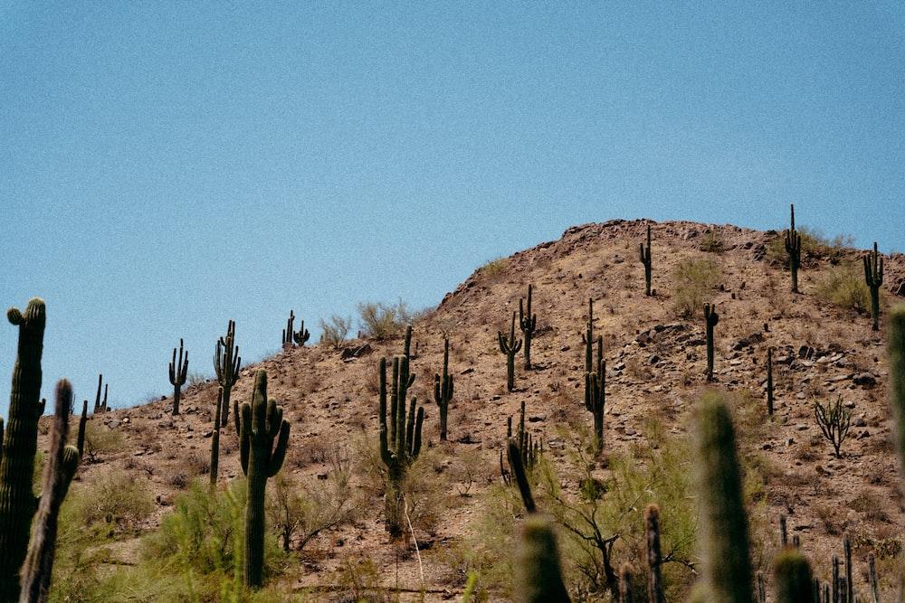 green cactus on brown rock mountain during daytime