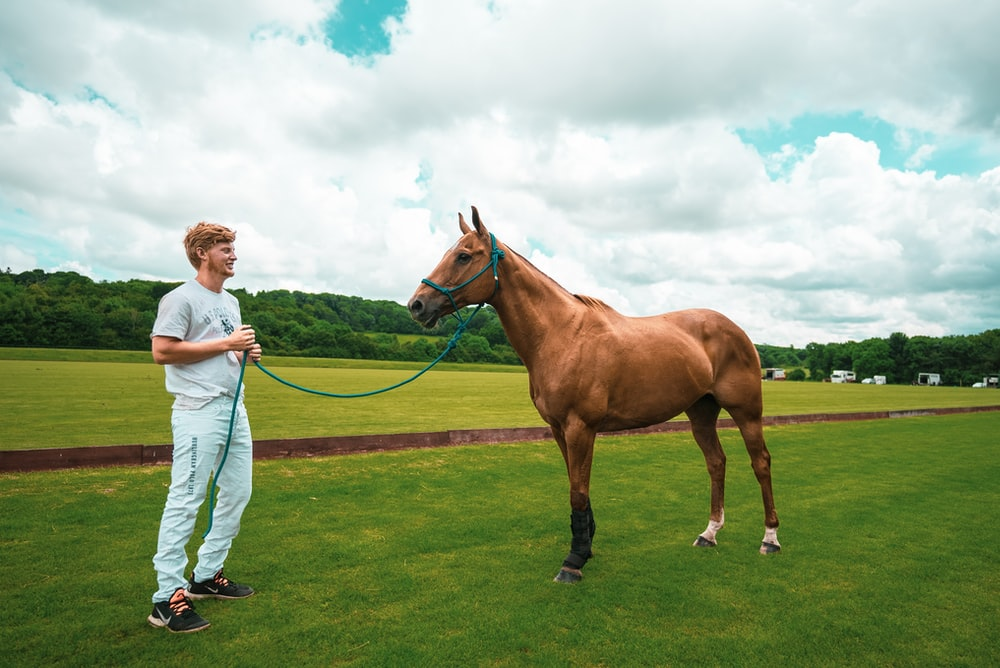 woman in white long sleeve shirt standing beside brown horse on green grass field during daytime