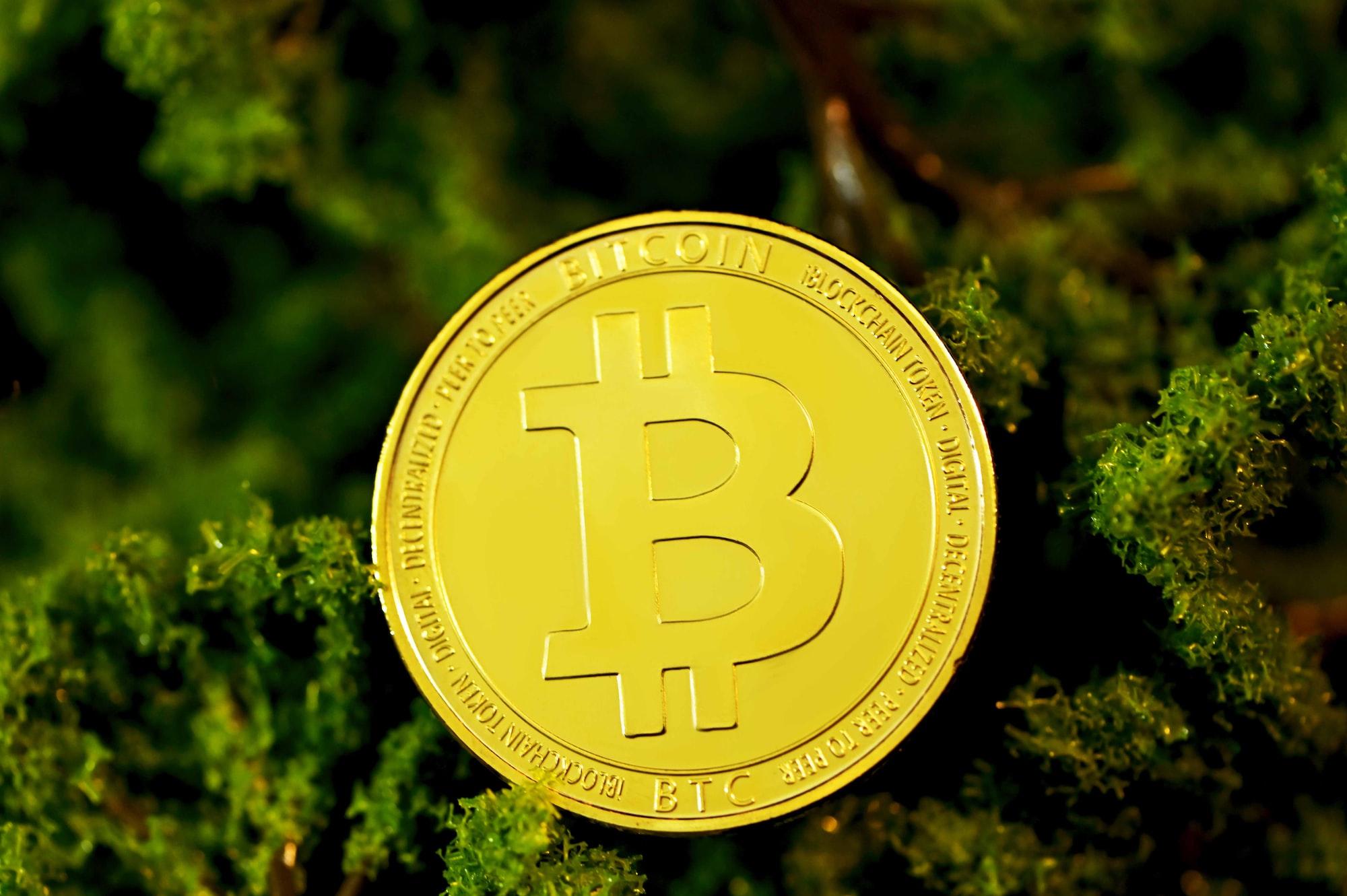 Bitcoin dopiero kiełkuje, wcale nie jest za późno!