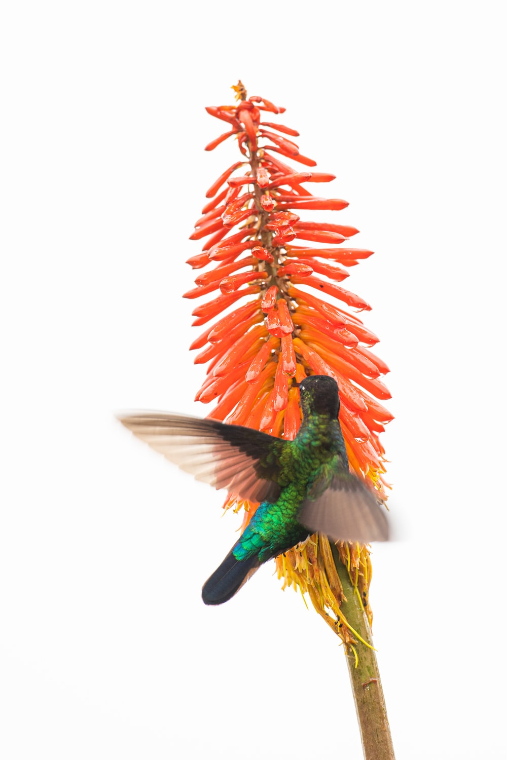 green and red bird flying