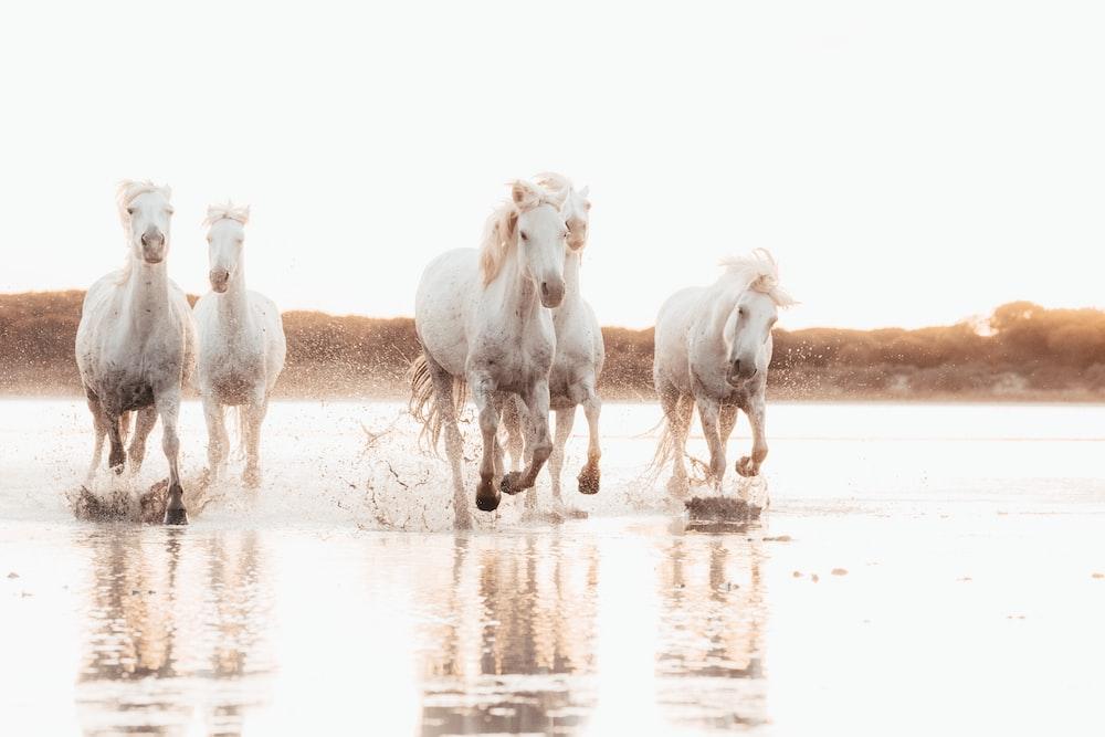 white horses running on water during daytime