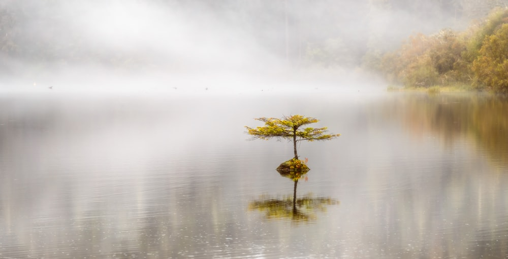 yellow flower on body of water
