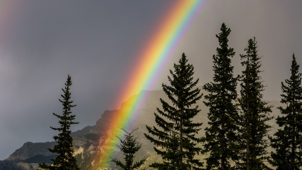 green trees under rainbow during daytime
