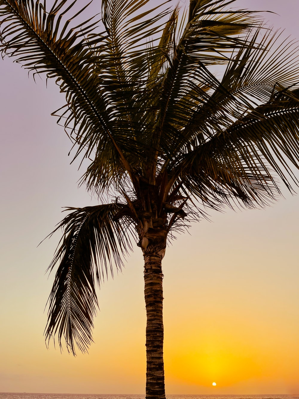 green palm tree during sunset