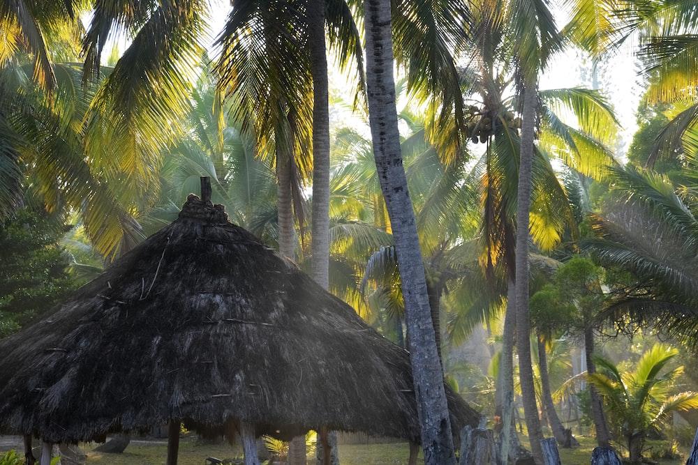 brown nipa hut on green coconut tree during daytime