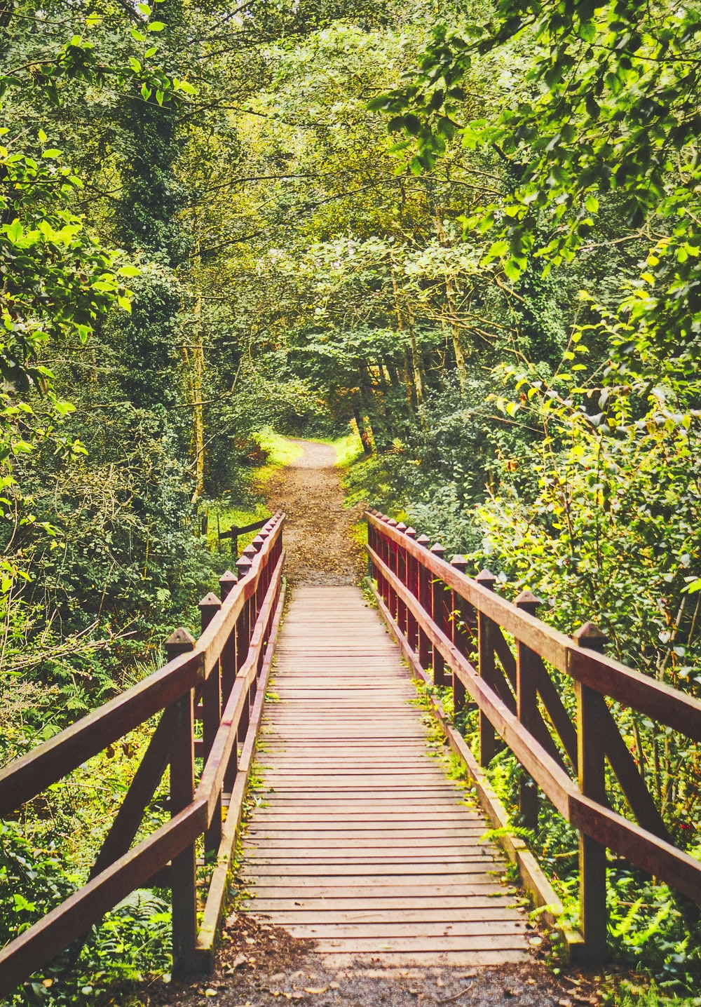 brown wooden bridge in the middle of green trees