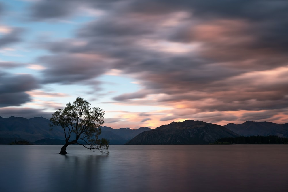 tree on island surrounded by water