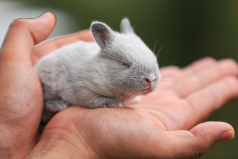 white rabbit on persons hand