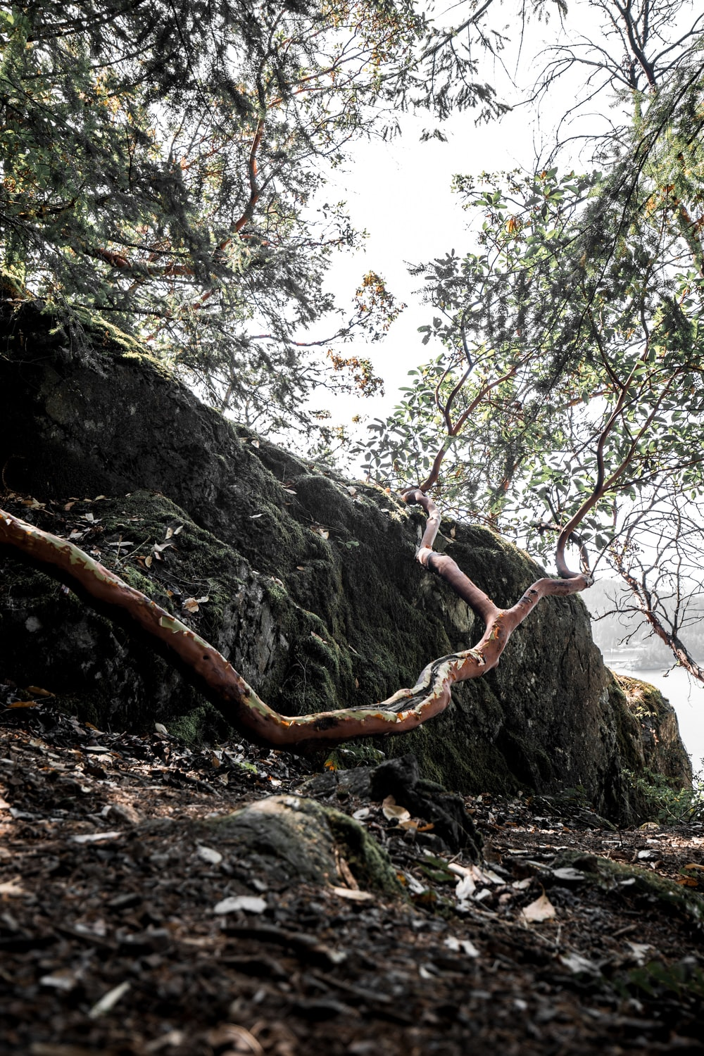 brown tree branch on gray rock
