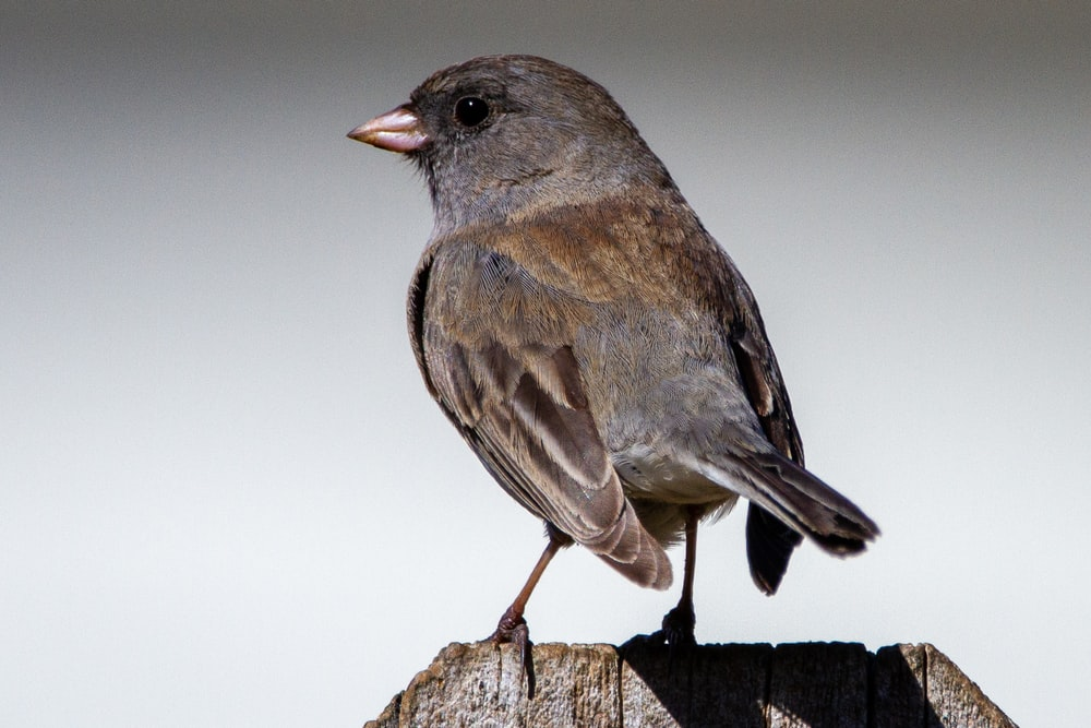 gray and black bird on brown wooden stick