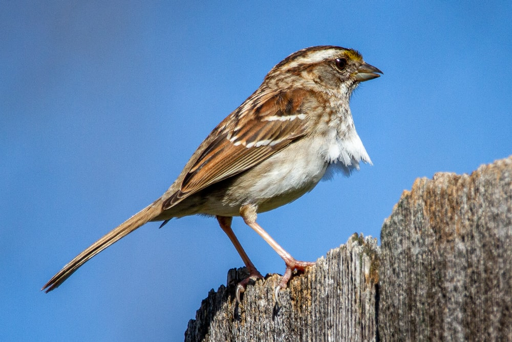 brown and white bird on brown wooden stick during daytime