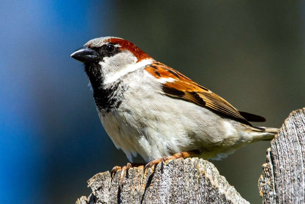white brown and black bird on brown tree trunk