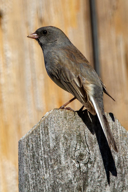 black bird on gray wood