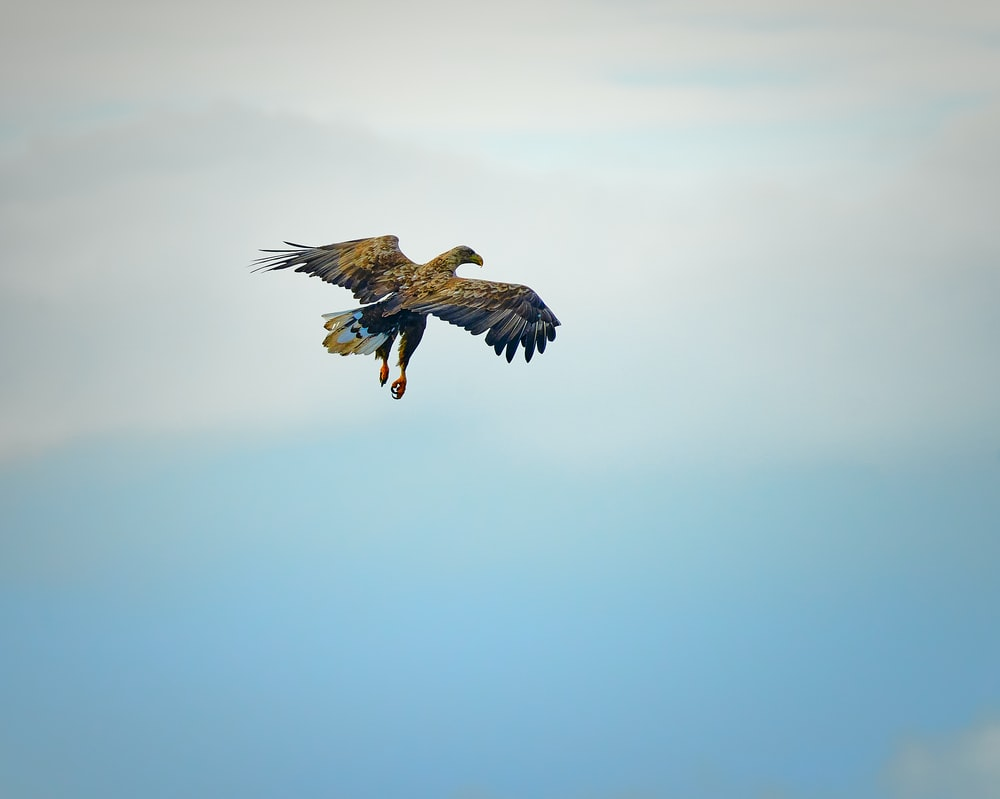 brown and black bird flying under blue sky during daytime