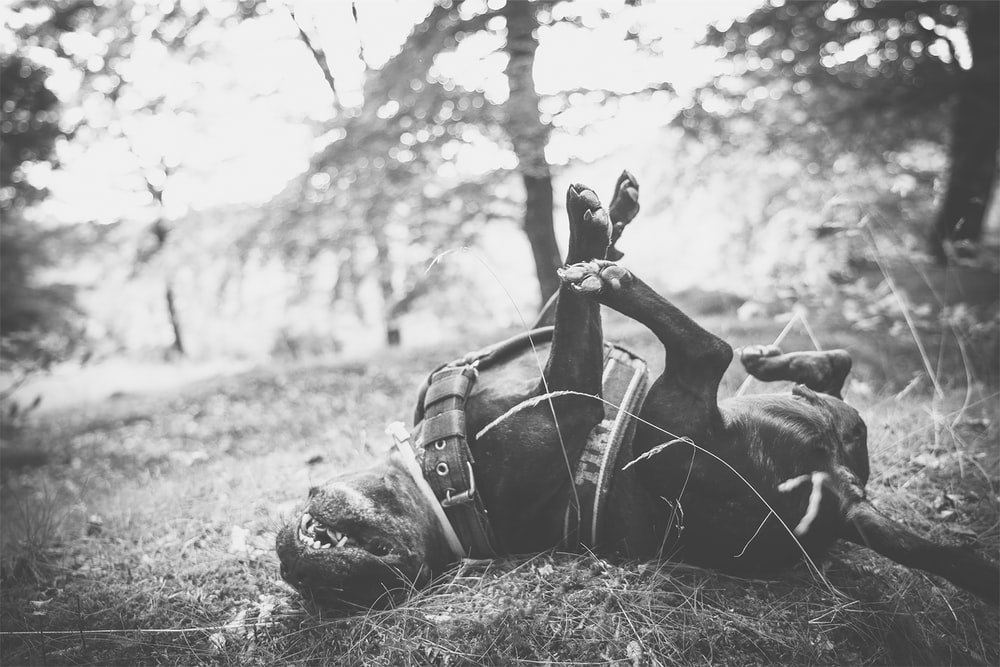 grayscale photo of man sitting on grass field