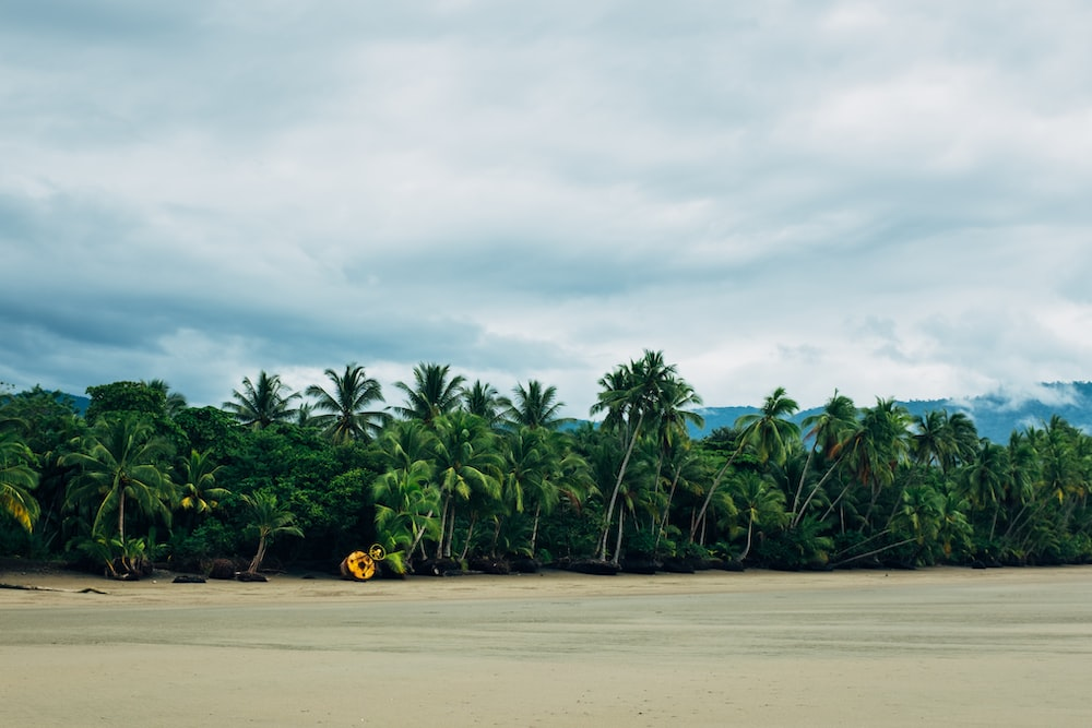 green coconut palm trees on brown sand under white clouds during daytime