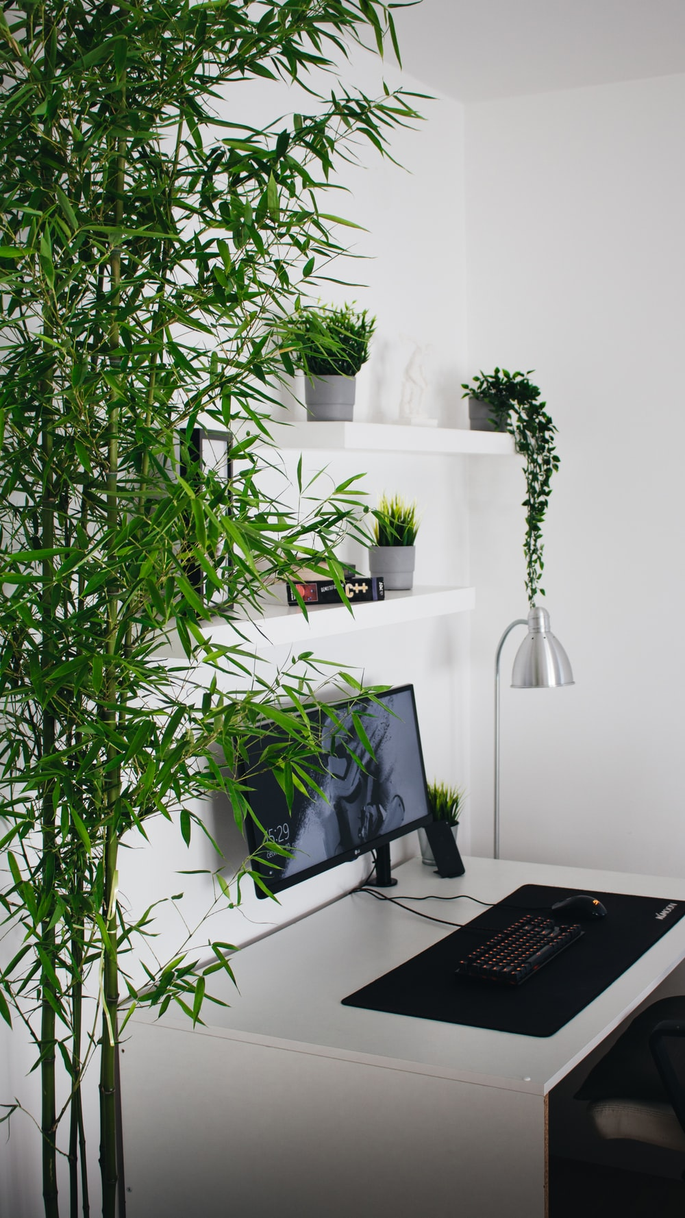green plant near black laptop computer