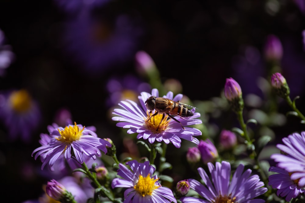 honeybee perched on purple flower in close up photography during daytime