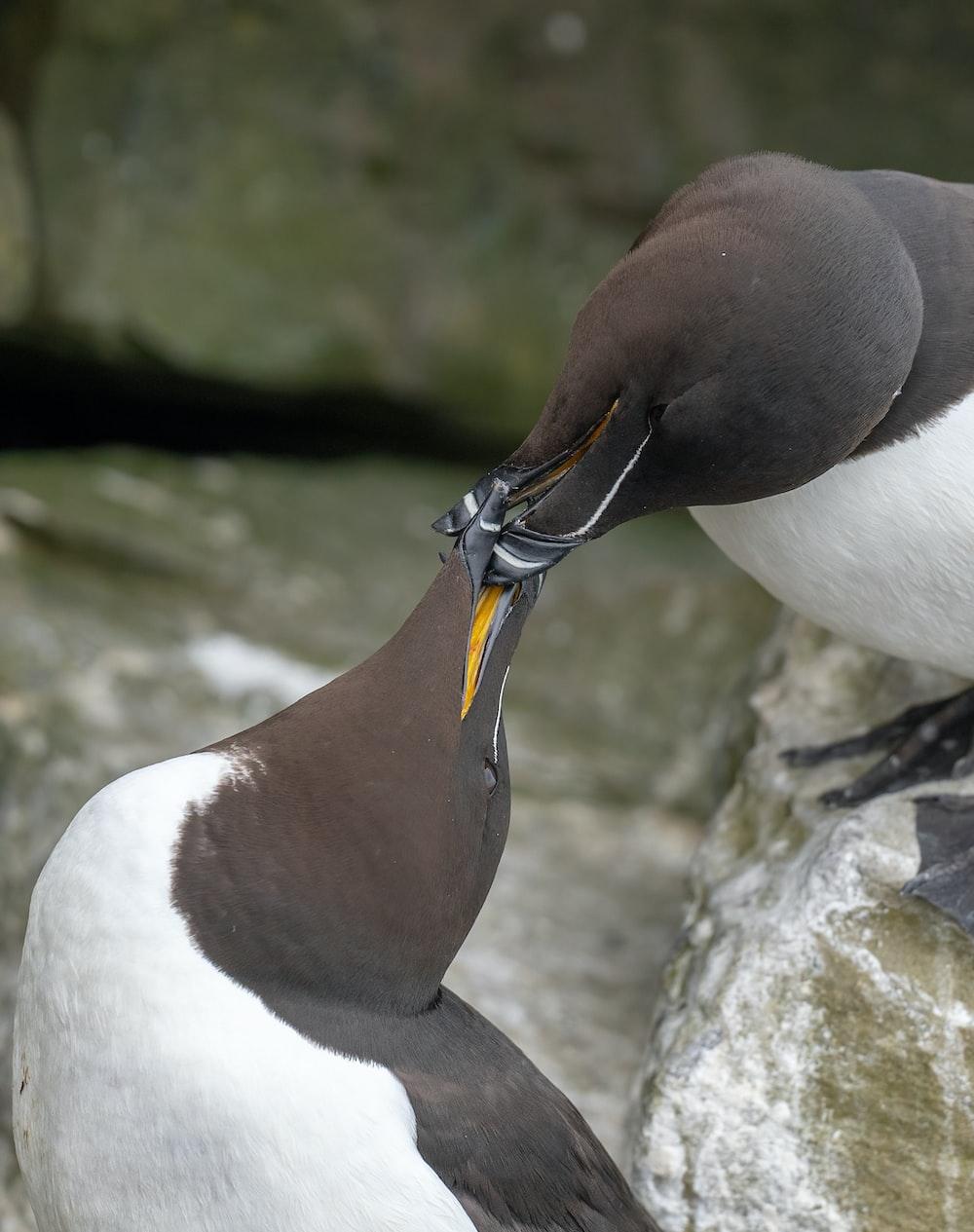 white and black bird on rock