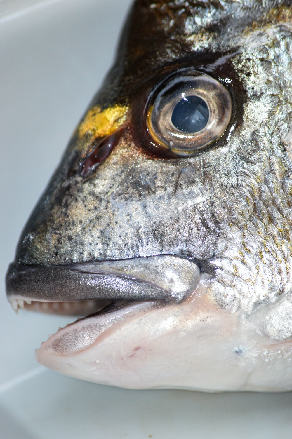 grey and yellow fish in close up photography
