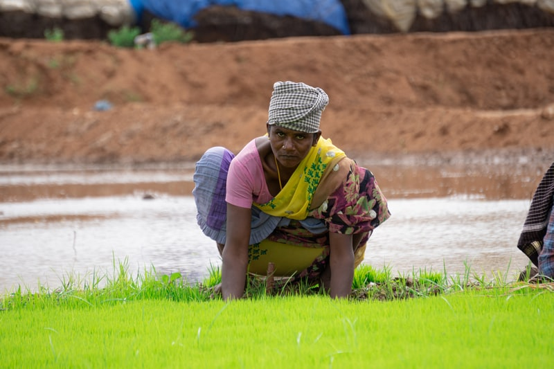 woman and green grass field