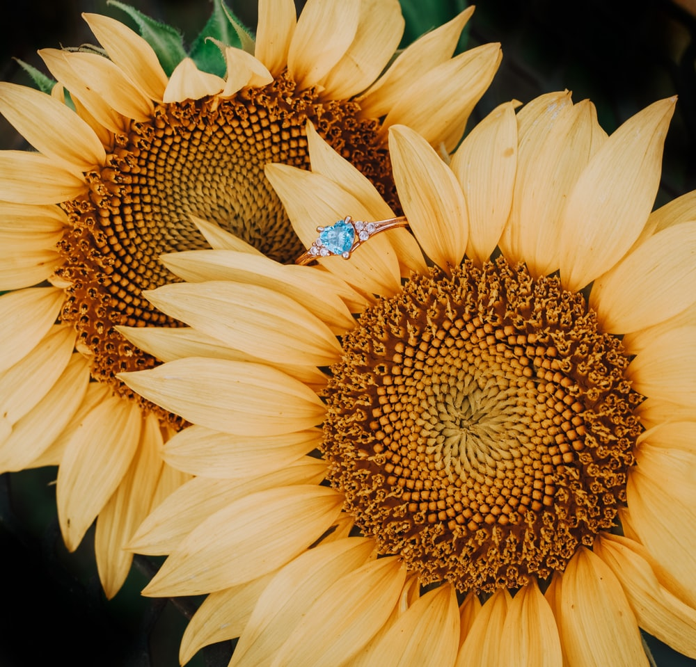 brown and black butterfly on yellow sunflower