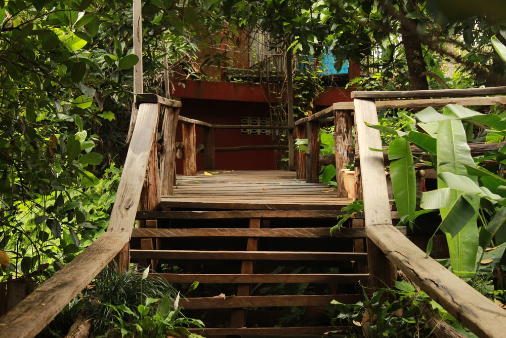 brown wooden staircase between green plants