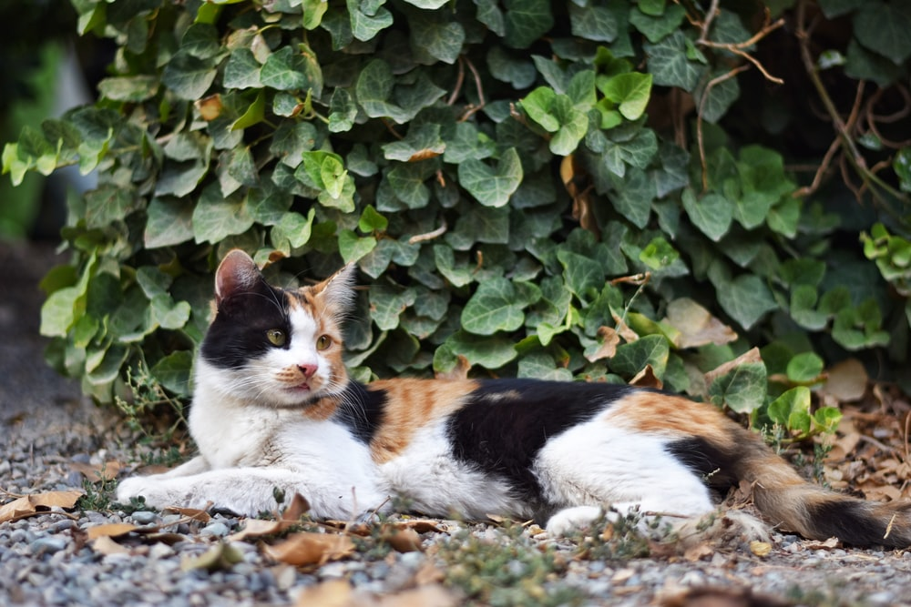 white black and brown cat on gray rocks