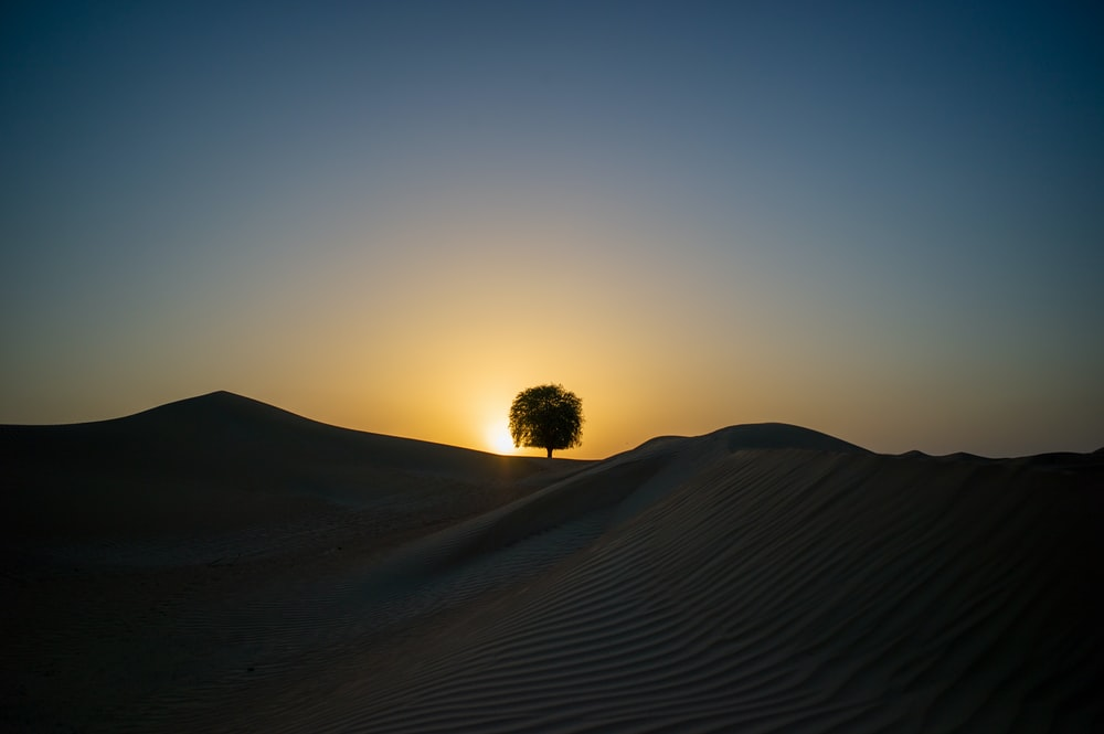 tree in the middle of desert during sunset
