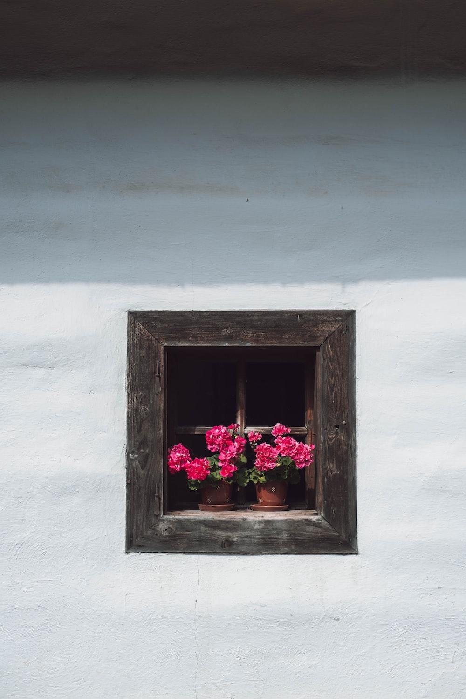 pink flowers in gray concrete window