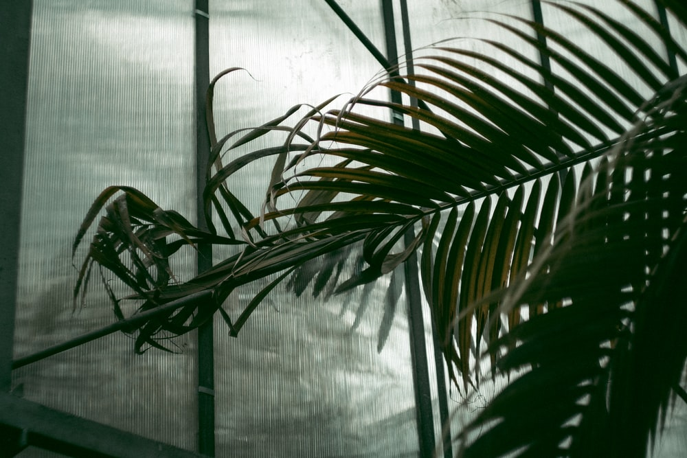 green palm plant near window