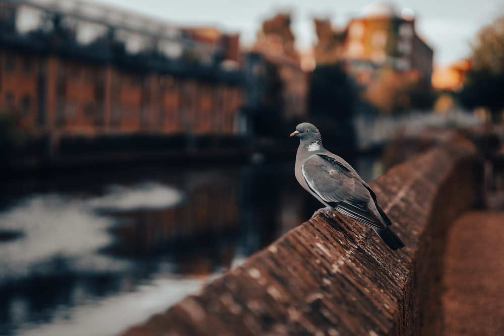 grey and white bird on brown wooden fence during daytime