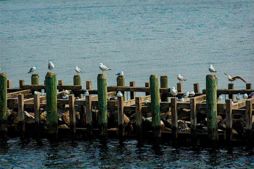 white bird on brown wooden dock during daytime