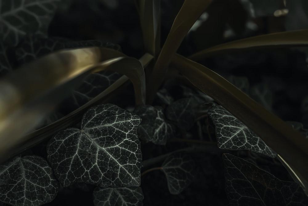 white and black leaf plant