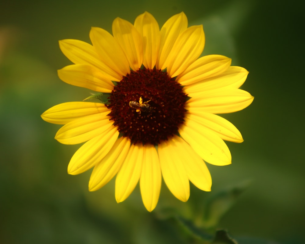 yellow daisy in bloom during daytime